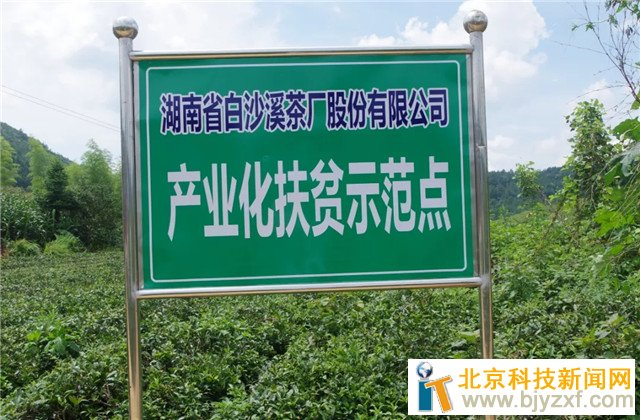 """白沙溪:依托生态优势 打造""""茶文化""""财富链"""