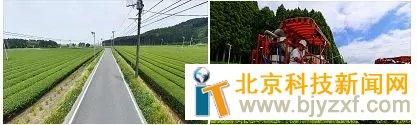 日本茶业成长现状